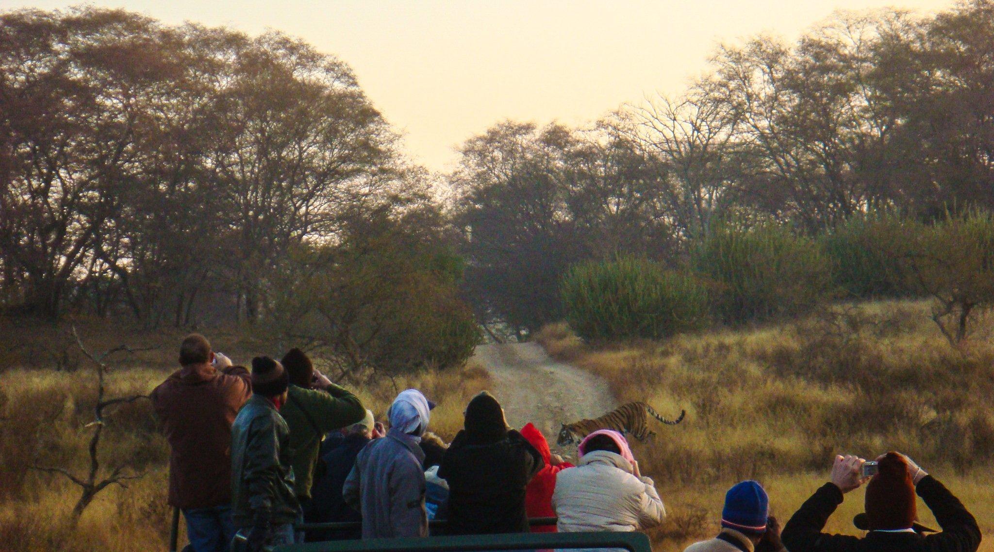 Tiger Tourists