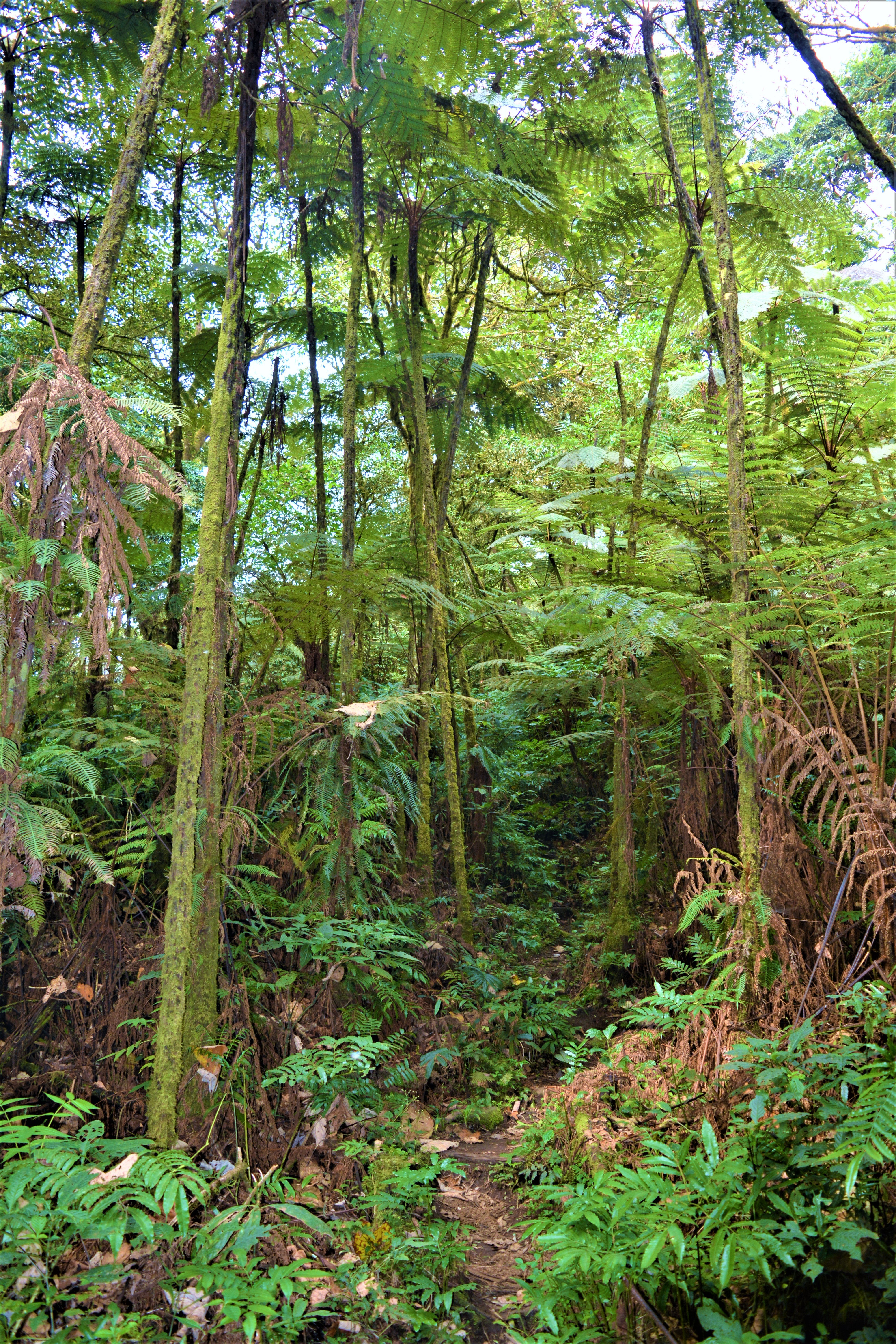 mt-cameroon-day-three-jungle