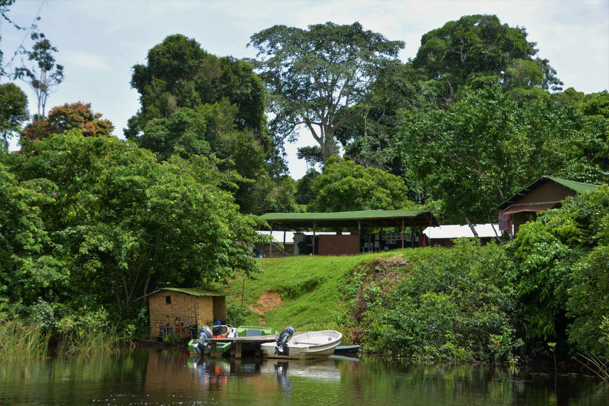 Yatouga Gorilla Camp Loango