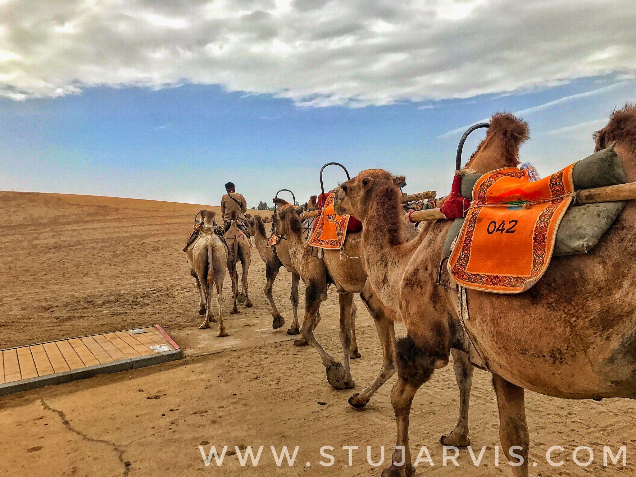 Camels at the Crescent Lake, Dunhuang, China.