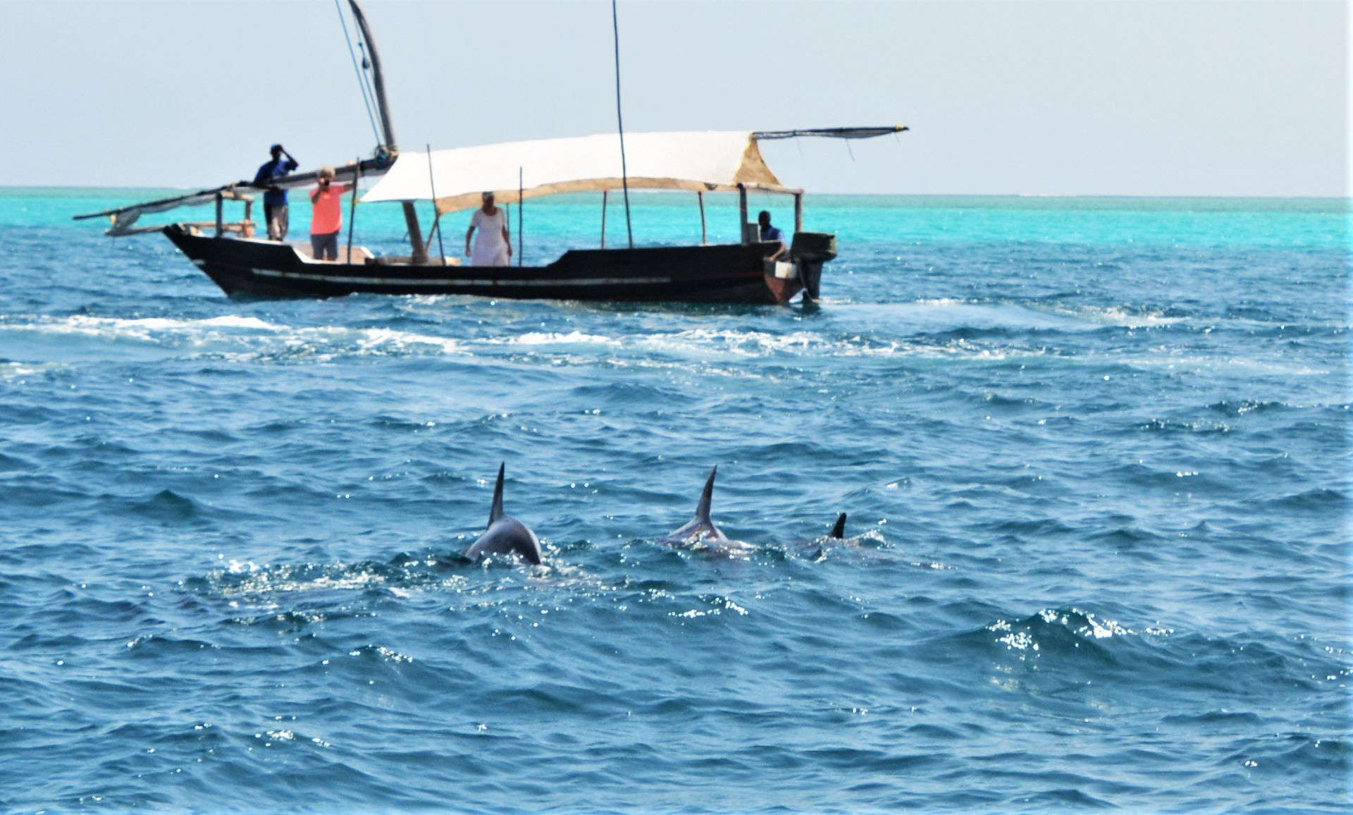 Mnemba-Island-Zanzibar-Dolphin-Spotting-Stu-Jarvis.com